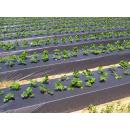 Immagine: 'Plastic free nei campi', al via in Puglia il ritiro dei teloni in plastica dalle aziende agricole a costo zero
