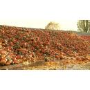 Immagine: Ispra: 'La principale causa di spreco alimentare è la sovrapproduzione di eccedenze'
